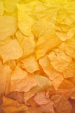 Yellow, orange and red autumn leaves in fall park. Royalty Free Stock Images