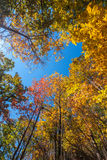 Yellow, orange and red autumn leaves - fall scenery Stock Photos