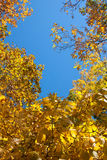 Yellow, orange and red autumn leaves - fall scenery Stock Photo