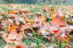 Yellow, orange and red autumn leaves Royalty Free Stock Photography