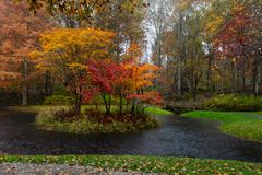 Vibrant yellow, orange and red maple trees on an island in Gibbs Gardens, Georgia, in the rain. royalty free stock image