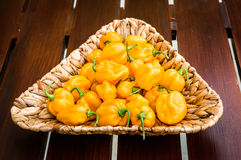 Yellow orange ripe habanero hot chili peppers on a wooden plate Royalty Free Stock Image