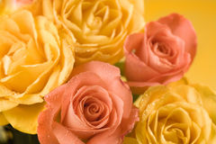 Yellow and orange roses background Royalty Free Stock Photos