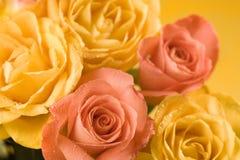 Yellow and orange roses background Royalty Free Stock Photos