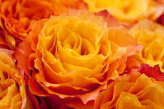 Yellow and orange roses. Bouquet of beautiful yellow and orange roses Stock Image