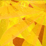 Yellow and orange Tapioca leaves Royalty Free Stock Photography