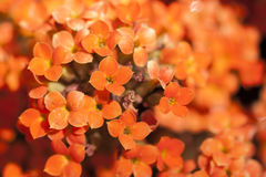 Yellow and orange tiny flowers bouquet in close up detail Stock Images
