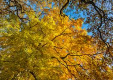 Background of colourful trees in autumn. Royalty Free Stock Photography