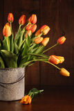 Yellow and orange tulips in old bucket Royalty Free Stock Photos