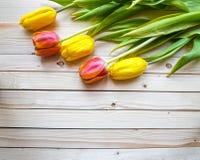 Yellow and orange tulips Stock Photography