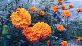 Yellow& orange stock images
