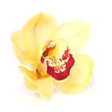 Yellow Orchid. Close up. Isolated over white Stock Photos