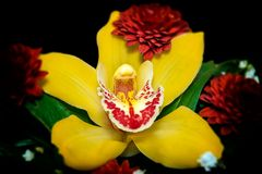 Yellow orchid arrangement with red flowers royalty free stock image