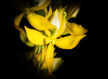 The yellow orchid Royalty Free Stock Images