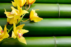 Yellow orchid on bamboo royalty free stock photos