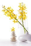 Yellow orchid bunchs Royalty Free Stock Photos