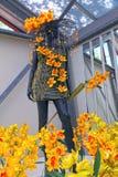 Yellow orchid floristic decor in flower greenhouse in Keukenhof Stock Photos