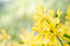 Yellow orchid flower blossom Stock Photo