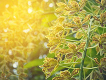 Yellow orchid flower at forest with sunlight background. Royalty Free Stock Image