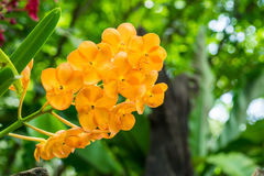 Yellow orchid flowers orchid flowers Stock Photography