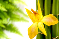 Yellow  orchid and green Royalty Free Stock Photography