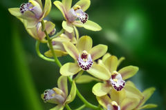 Yellow orchid on green Royalty Free Stock Photo