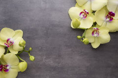 Yellow orchid on the grey background. Stock Photo