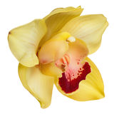 Yellow orchid head, isolated on a white background Stock Photo