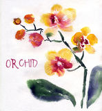 Yellow orchid isolated on white. Painted in watercolor Stock Photos