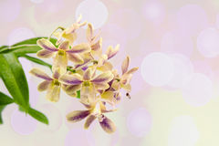 Yellow orchid pink backdrop Stock Images