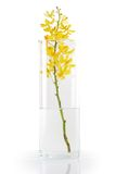Yellow orchid in vase Royalty Free Stock Photography