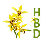 Yellow orchid on white background, happy birthday card Stock Image