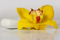 Yellow orchid with white soap on the white background - wellness & spa. Yellow orchid with white soap - wellness Royalty Free Stock Images