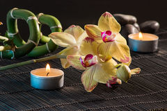 Yellow orchids Stock Photo