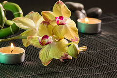 Yellow orchids Stock Image