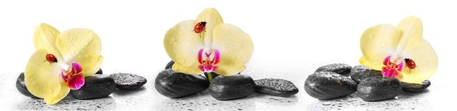 Yellow orchids and pebbles with ladybug. Panoramic image Royalty Free Stock Image