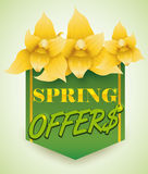 Yellow Orchids for Spring Offers, Vector Illustration Stock Photography