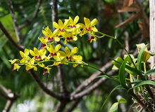 Yellow orchids under natural lighting Royalty Free Stock Photography