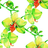 Yellow orchids. Watercolor seamless pattern with tropical flowers. Royalty Free Stock Photos