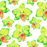 Yellow orchids. Watercolor seamless pattern with tropical flowers. Royalty Free Stock Images