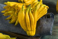 Yellow Organic Buddhas Hand Citrus Stock Photography