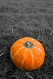 Yellow Organic Pumpkin on Grass Background Royalty Free Stock Images