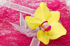 Yellow Orhid with ribbon Royalty Free Stock Image