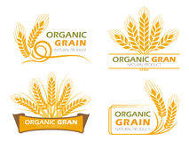 Yellow paddy barley rice organic grain products and healthy food banner sign vector set design royalty free illustration