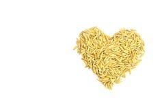 Yellow paddy jasmine rice Royalty Free Stock Photo