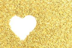 Yellow paddy jasmine rice Royalty Free Stock Images