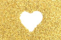 Yellow paddy jasmine rice Stock Photo