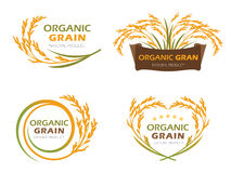 Yellow paddy rice organic grain products and healthy food banner sign vector set design royalty free illustration