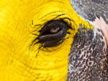 Yellow Painted Elephant's Eye Royalty Free Stock Images