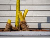 Yellow painted young tree with visble corrugated plastic pipe drainage and coconut matting. Yellow painted young tree with visble corrugated plastic pipe Royalty Free Stock Photos